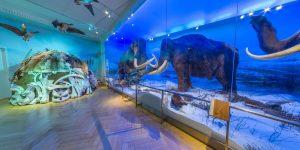 Mammoth Finnish Museum of Natural History