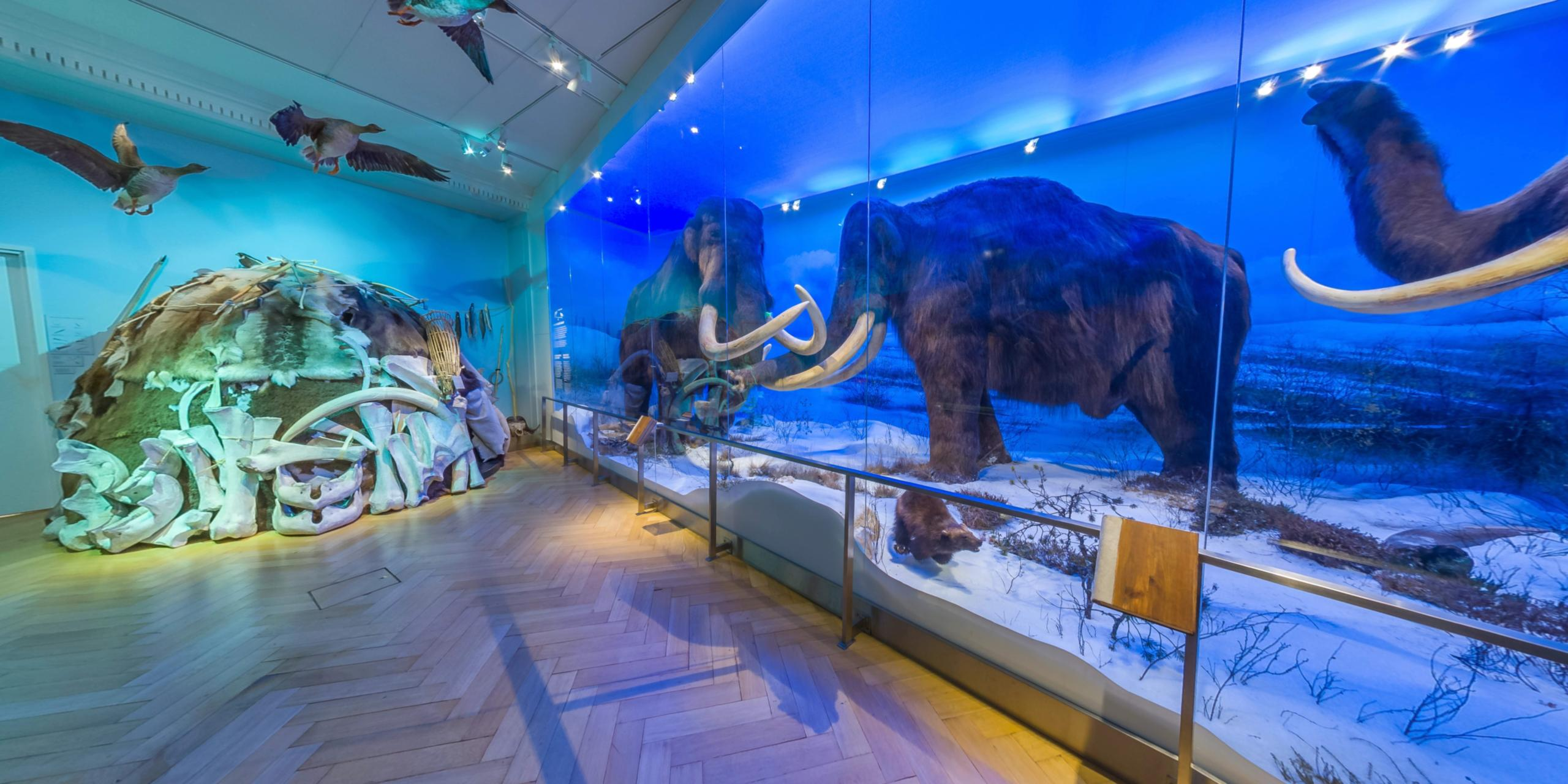 Mammoth Finnish Museum of Natural History